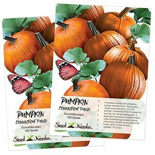 Special Pumpkin Seed Collection